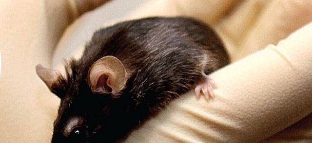 Американец помог мыши спастись от кота, ценой собственного здоровья