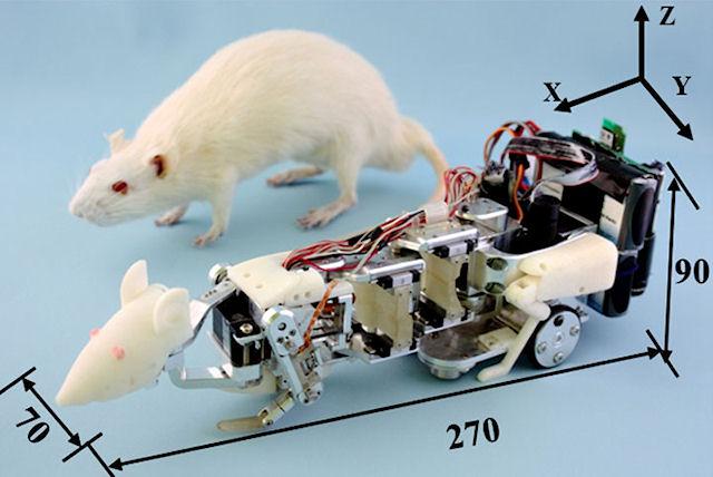 Помощником космонавтов станет робот-крыса