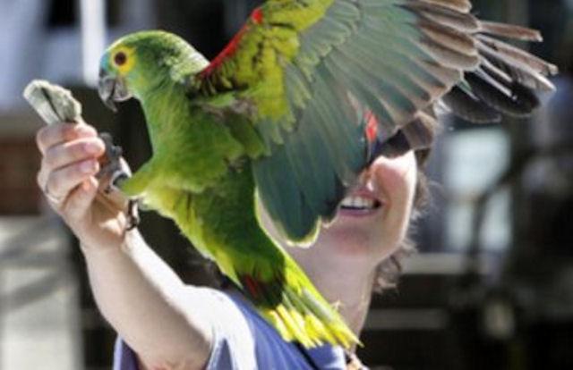 Хищный попугай отобрал у туриста кошелек