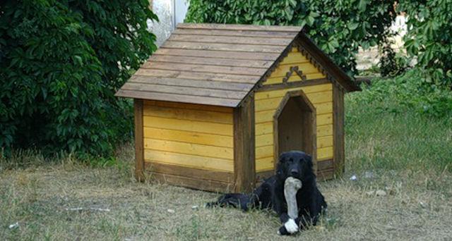 Как построить будку для вашей собаки
