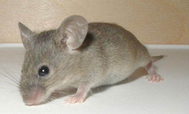 Пожарный спас из огня мышонка, рискуя жизнью