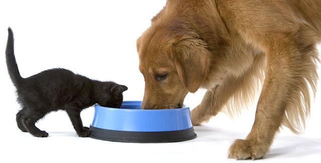 Рацион питания домашних животных