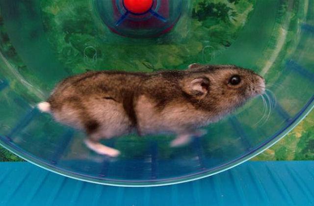 Определены опасные и безопасные растения для крыс