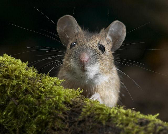 Разобрать стену ради спасения мышки