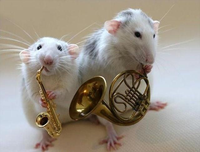 Самцы мышей привлекают самок напевами