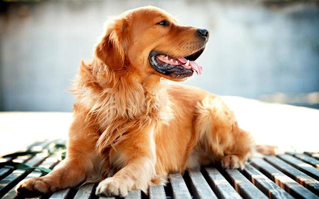 Самые умные и популярные породы собак