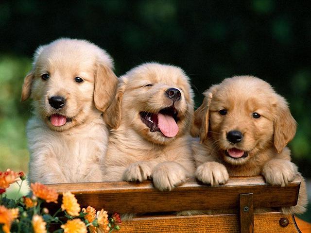 Собака – красивое животное
