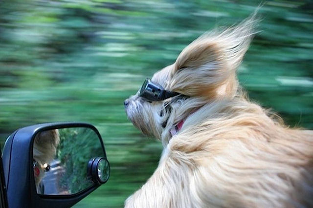 В США собака совершила ДТП