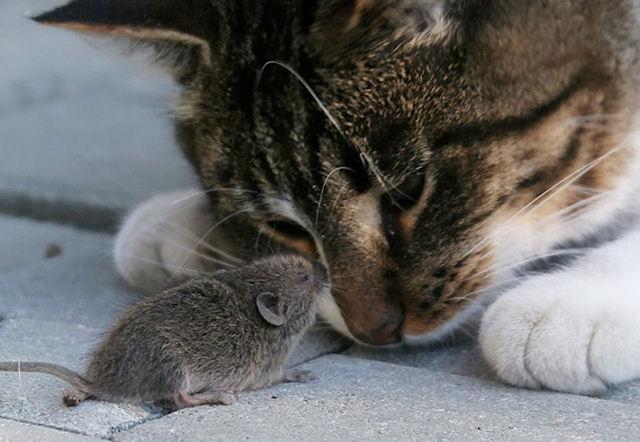Спящей мыши внушили ложные воспоминания