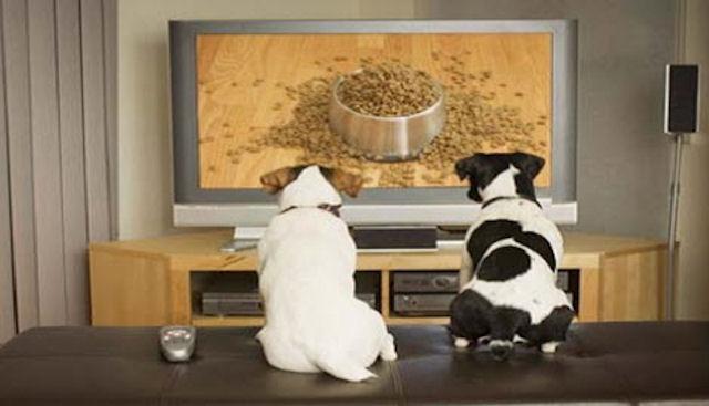 В США будет запущен первый телеканал для собак