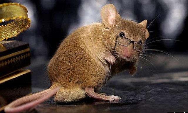 У лабораторных мышей выявили «ген Гомера Симпсона»