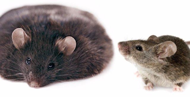 Ученые придумали способ борьбы с лишним весом