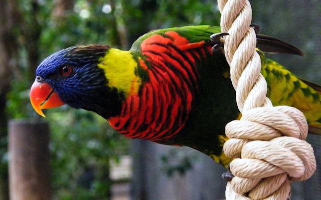 Узнайте больше о попугаях