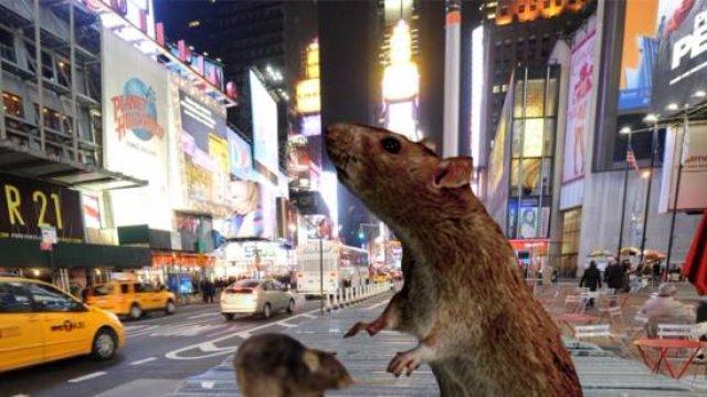В битве за Нью-Йорк люди победили крыс