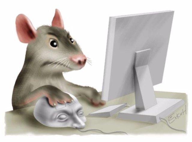 В будущем крысы достигнут размера коров, - ученые