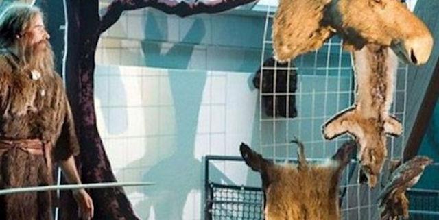 В голландском музее можно увидеть чучело мыши