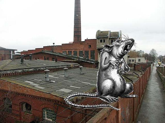 В Калининграде потратят 3 млн рублей на защиту от крыс и клещей