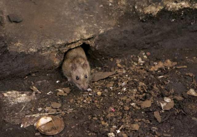 В Китае самолёт совершил вынужденную посадку из-за крысы