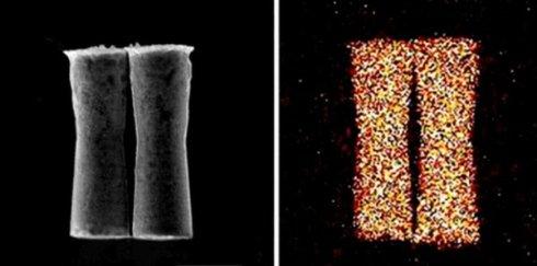 В мышиный организм поместили микроскопические машины
