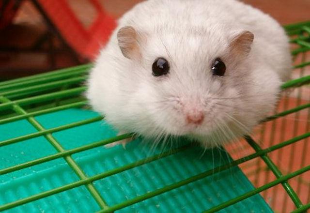 В США пытаются поймать радиоактивную мышь
