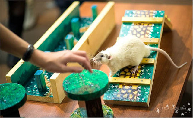 Мыши решили «внести свой вклад» в развитие озимых культур
