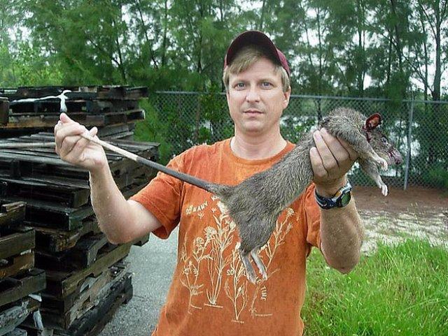 Во Флориде нашли гигантских сумчатых крыс
