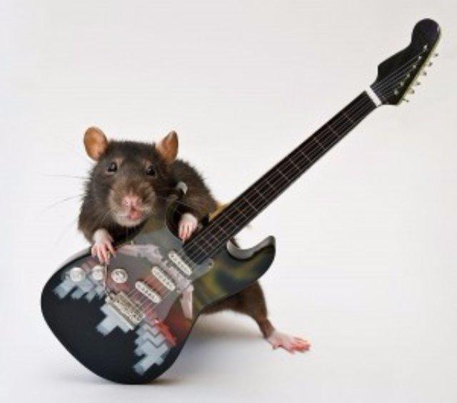 Вычислительные способности крыс «переплюнули» Google