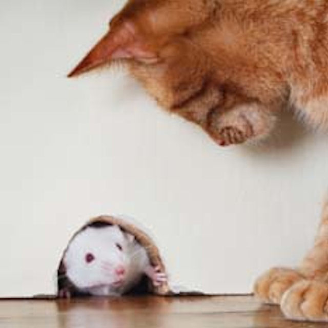 Выведена смелая мышь