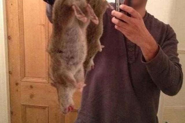 Яд способен превратить крыс в мутантов