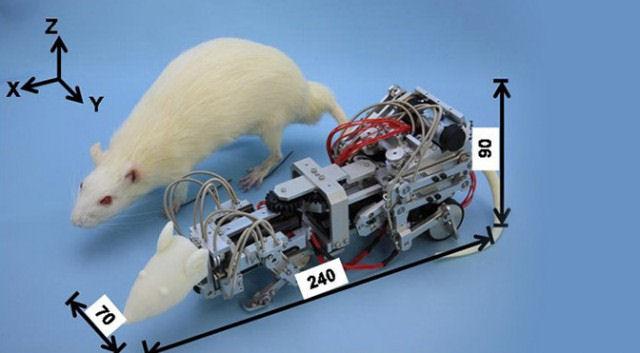 Японские ученые создали робота-крысу