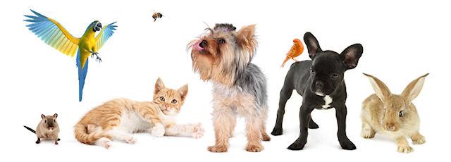 Зачем посещать ветеринарные клиники