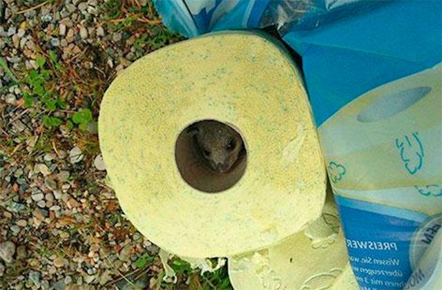 Житель Австрии обнаружил в туалетной бумаге мышку