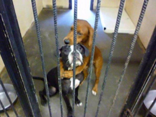 Обнимашки спасли собак от смерти