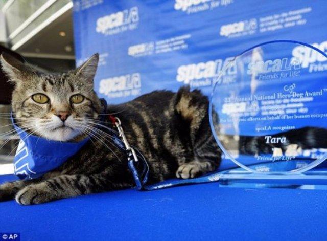 В Лос-Анджелесе кошке вручили награду для собак