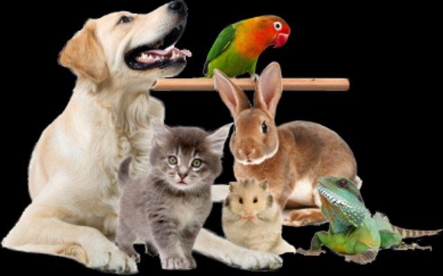 Добро пожаловать в интернет магазин товаров для животных PethouseUa