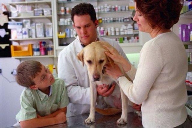 Советы Айболита или чем лечить животных?