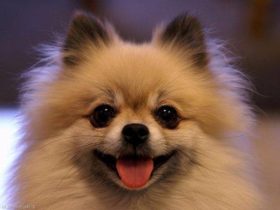 Среди собак тоже бывают пессимисты и оптимисты