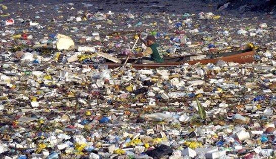 Ученые обнаружили пластик в желудках у 90% морских птиц