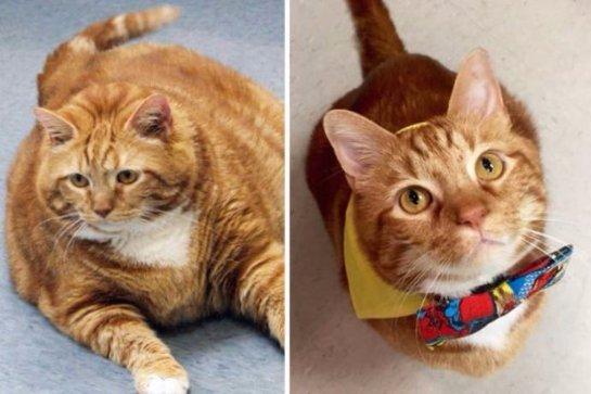 Толстому коту удалось похудеть на  10 кг