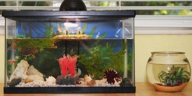 Где купить качественный фильтр в аквариум