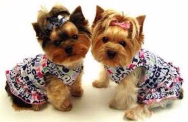 Открытие магазина с одеждой для собак