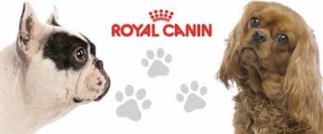 Почему следует купить роял канин для собак