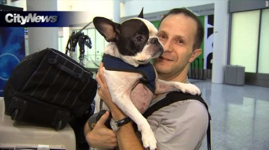 Канадский пилот совершил экстренную посадку из-за собаки
