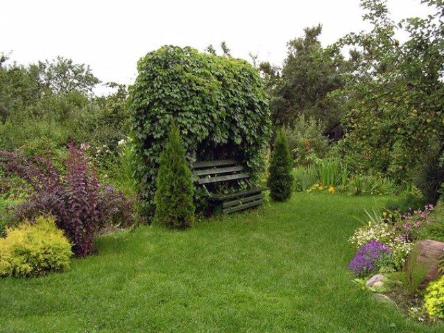 Экономные фантазии и находчивость в саду