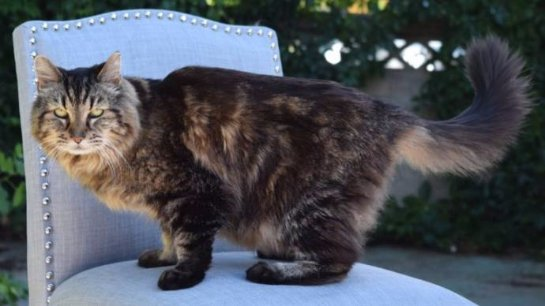 26-летний кот признан самым старым котом в мире