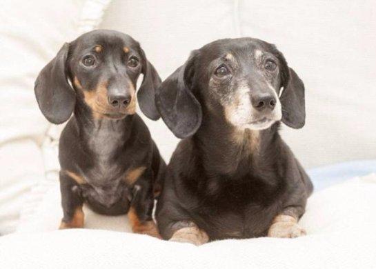В Великобритании появилась первая клонированная собака