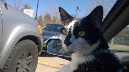 Хозяева рассказали про своего необычного кота
