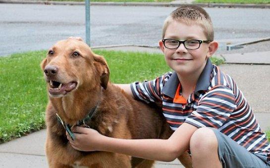 Школьник пожертвовал свои деньги на покупку бронежилетов для собак