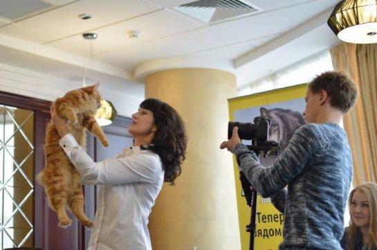 В Екатеринбурге откроют новое заведение для котов