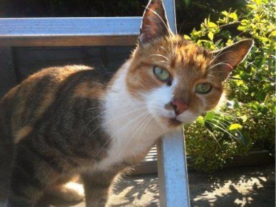 Невероятное путешествие датской кошки